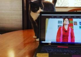Angel the cat sniffs at laptop on table